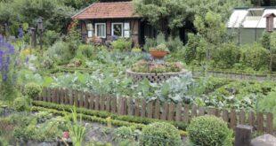 Pflanzengesundheit - Stärkungsmittel machen fit